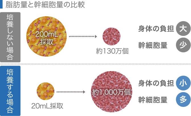 脂肪量と幹細胞量の比較