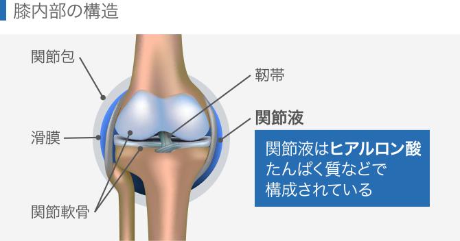 膝内部の構造